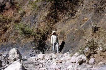 Lutitas y areniscas con horizontes de carbón de la parte inferior del grupo Tecocoyunca, estado de Guerrero.