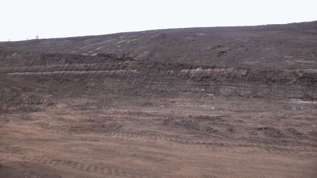 Figura 5. Capas sub-horizontales de lignito con intercalaciones aisladas de limolita en la mina de Yallourn.