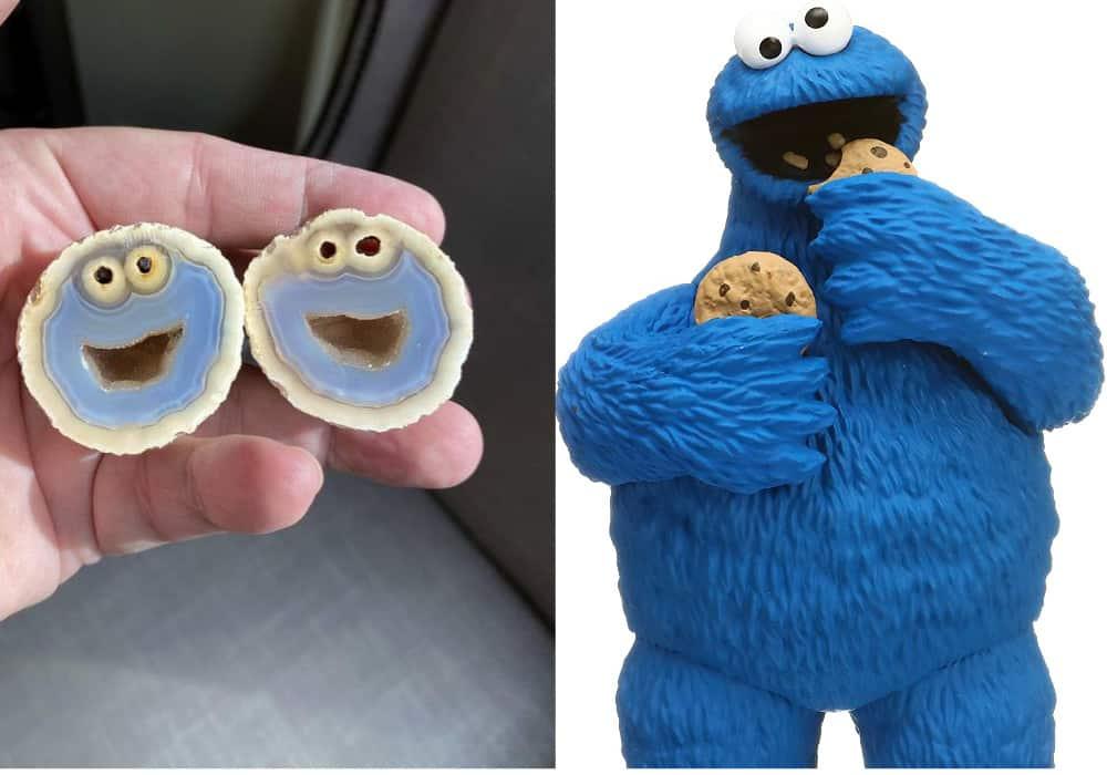 Monstruo come galletas similar a